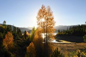 Leaf Color Chart For Sale Fall Color Changes Colorado 2019 Heres Where To Go Leaf