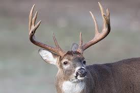 2017 Ohio Deer Forecast