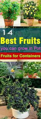 Plants For Kitchen Garden 17 Best Ideas About Vegetable Gardening On Pinterest Gardening