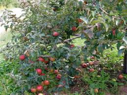 Apples 101 How To Pick And Store Michiganu0027s Favorite Fruit U2013 Lake What Fruit Trees Grow In Michigan