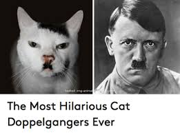 Hosted ImgAnimal The Most Hilarious Cat Doppelgangers Ever New Hilarious