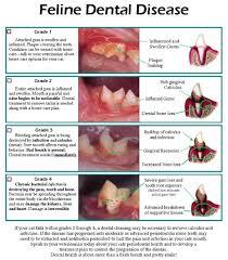 Pfizer Canine Dental Chart 69 Interpretive Feline Dental