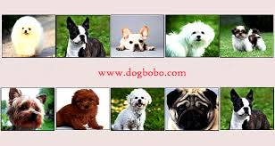Dog Breeds Small List That Dont Shed Dog Breeds In