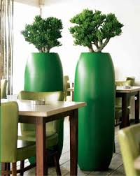 office plant displays. Eco Office Plants - Eco-friendly Plant Displays And Landscaping For London The South I