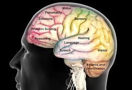 Resultado de imagen de atentia psihologie