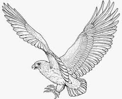 Red Tailed Hawk Coloring Page Birds
