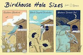 Best Dimensions For Birdhouse Entrance Holes