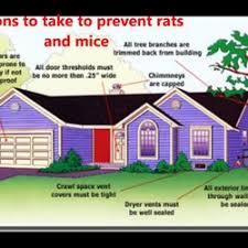 pest control amarillo tx. Modren Pest Photo Of Amarillo Pest Control  Amarillo TX United States Rodent Control With Tx