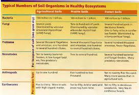 Soil Characteristics Chart Food Web And Soil Health Scoop On Soil