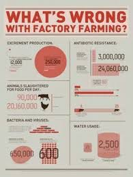 the dirty truth about meat factory farming has become one of the what s wrong factory farming vegan infographic theenvironment health climatechange animalabuse