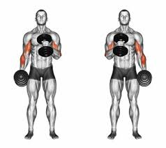 Gym Biceps Workout Chart Develop Your Biggest Biceps Ever Food Fitness