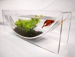 more fancy living for your betta fish the zeroedge betta bowl is handcrafted out of cast acrylic material and is large enough to incorporate plants