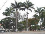 imagem de Caputira Minas Gerais n-5