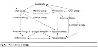 essay on ecology various arenas of ecology