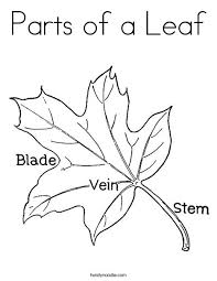 Small Picture Parts of a Leaf Coloring Page Learn It Pinterest Leaves