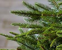 12ft Artificial Christmas Trees | Xmas Department | Hayes Garden World