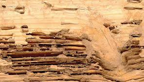 Image result for measures to control termite infestation