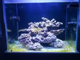 Beas second reef! [archivio] acquaportal forum acquario dolce e