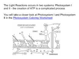The Light Reactions Worksheet Chapter 7 Photosynthesis Ppt Video Online Download