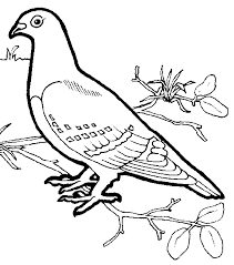 Small Picture birds Coloring Pages Birds Coloring Pages Free Printable