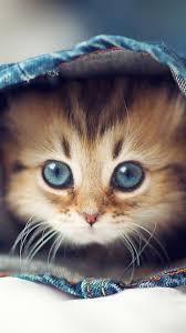 Cute Cat HD iPhone Wallpapers ...