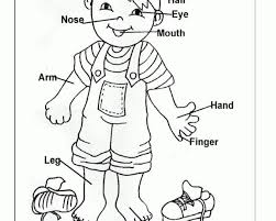 Small Picture Convenient Free Coloring Pages Of My Body Part Preschool Body