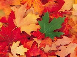 Resultado de imagen para por qué las hojas de los árboles dejan de elaborar la clorofila en invierno