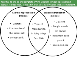 Venn Diagram Comparing Meiosis And Mitosis Venn Diagram Comparing Mitosis And Meiosis Magdalene