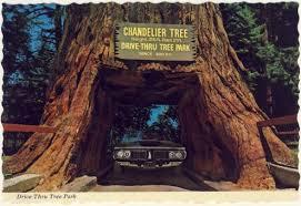 postcard drive thru tree park low view