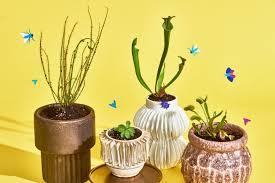 Carnivorous Plants Low Light Carnivorous Plants That Make Great Houseplants Apartment