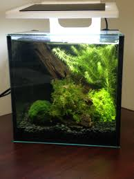 office desk aquarium. I Got The Green Light From My Boss To Put A Small Aquarium On Desk In Office, So I\u0027ve Spent Bunch Of Time This Weekend Getting As Much Office
