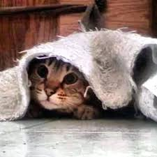 hide and seek cat under rug play as seen on tv a cats guide to dominating