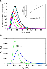 Light Function Download Predicted Macroscopic Response As A Function Of Light Flash