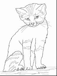 Small Picture Beautiful cat and the hat coloring pages printable with cat in the
