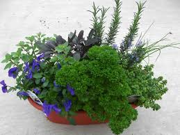 image of container herb garden simple and pretty herb mixing