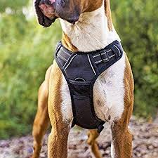 Rabbitgoo Dog Harness Size Chart Pin On Blackhawk