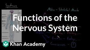 Flow Chart Of Nervous System In Human Beings Functions Of The Nervous System Video Khan Academy