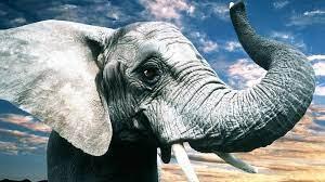 Elephant HD Wallpaper 1080p #je11w0 ...