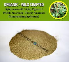 Powder Spiny Amaranth Amaranthus Spinosus Spiny Pigweed Prickly Amaranth Thorny Amaranth Amaranthus Spinosus Organic Wild Crafted