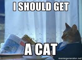 newspaper cat realization | Meme Generator via Relatably.com