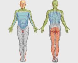 Реферат Классический массаж как метод физической реабилитации  Классический массаж как метод физической реабилитации
