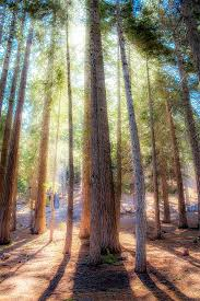 >enchanted forest photography outdoors emerald bay national park  enchanted forest photography outdoors emerald bay national park light through the trees