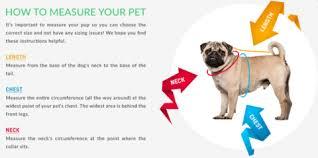 dog breed size chart size chart pawsome doggie