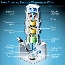 The Key Components Of A Scanning Electron Microscope Howstuffworks
