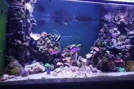 orphek led review large aquarium peru