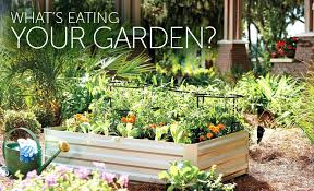 plants for raised garden beds how to prevent common garden pests best plants for raised garden beds