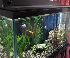 automatic biorhythm led aquarium light steps