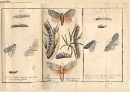 rare old antiquarian books erflies lepidoptera insects virtual antique rare art book map fair virtual rare book fair