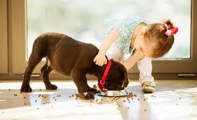 Dog Best Friend Quotes Mesmerizing Dogs And Babies Are Best Friends 48 Minutes YouTube