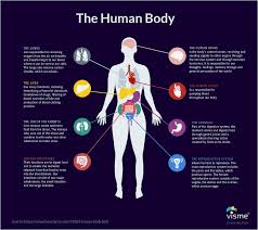 Flow Chart Of Nervous System In Human Beings 44 Types Of Graphs And How To Choose The Best One For Your